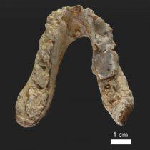 Ο αρχαιότερος προάνθρωπος ίσως εμφανίστηκε στη νοτιοανατολική Ευρώπη