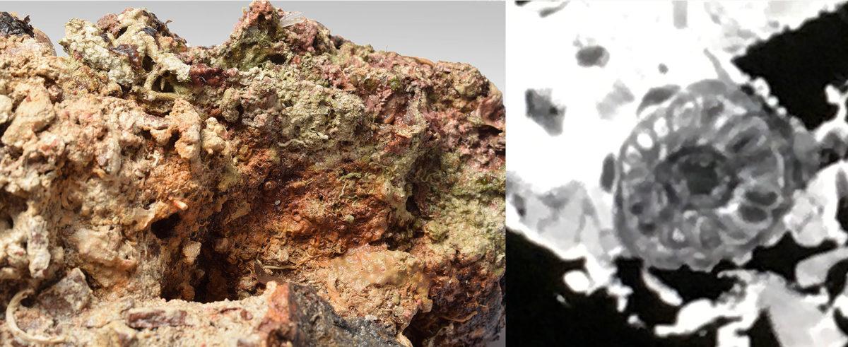 Συσσωμάτωμα σιδερένιου αντικειμένου, μέσα στο οποίο, όπως έδειξε η ραδιογραφία, υπάρχει μία μεσόμφαλη μεταλλική φιάλη, το είδος μετάλλου της οποίας  θα φανεί μετά την απελευθέρωσή της από τον επίπαγο (φωτ. ΥΠΠΟΑ).