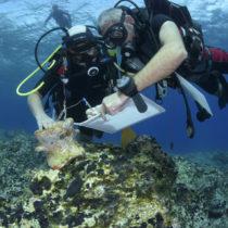 Υποβρύχια αρχαιολογική έρευναστη θαλάσσια περιοχή της νότιας Νάξου