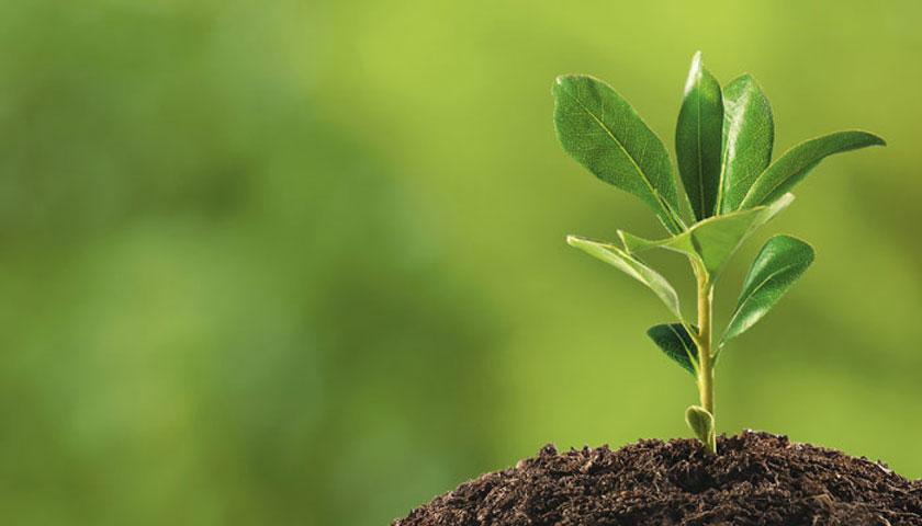 Έως τώρα θεωρείτο ότι τα πρώτα φυτά της ξηράς εμφανίστηκαν πριν από περίπου 420 εκατ. χρόνια.