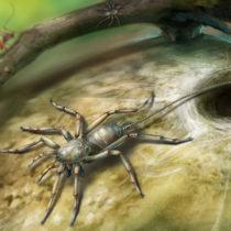 Η πρώτη αράχνη με ουρά βρέθηκε σε κεχριμπάρι 100 εκατ. ετών