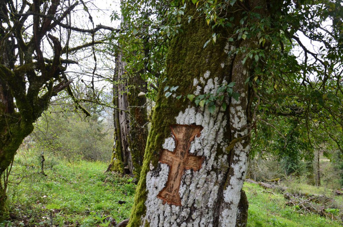 Ένας εγχάρακτος σταυρός στο φλοιό μιας γέρικης βελανιδιάς στο ιερό δάσος της Βίτσας εκπληρώνει ένα τάμα στον Άγ. Νικόλαο στον οποίο είναι αφιερωμένη η παρακείμενη εκκλησία, η οποία γιορτάζει στις 20 Μαΐου. Στο παρελθόν η γιορτή αυτή σηματοδοτοτούσε την έναρξη της βόσκησης στο δάσος (φωτ.: Καλλιόπη Στάρα).