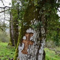 Τα ιερά δάση του Ζαγορίου και της Κόνιτσας