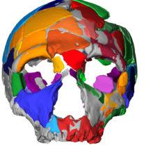 Στην Ελλάδα βρέθηκε το αρχαιότερο δείγμα Homo sapiens στην Ευρασία