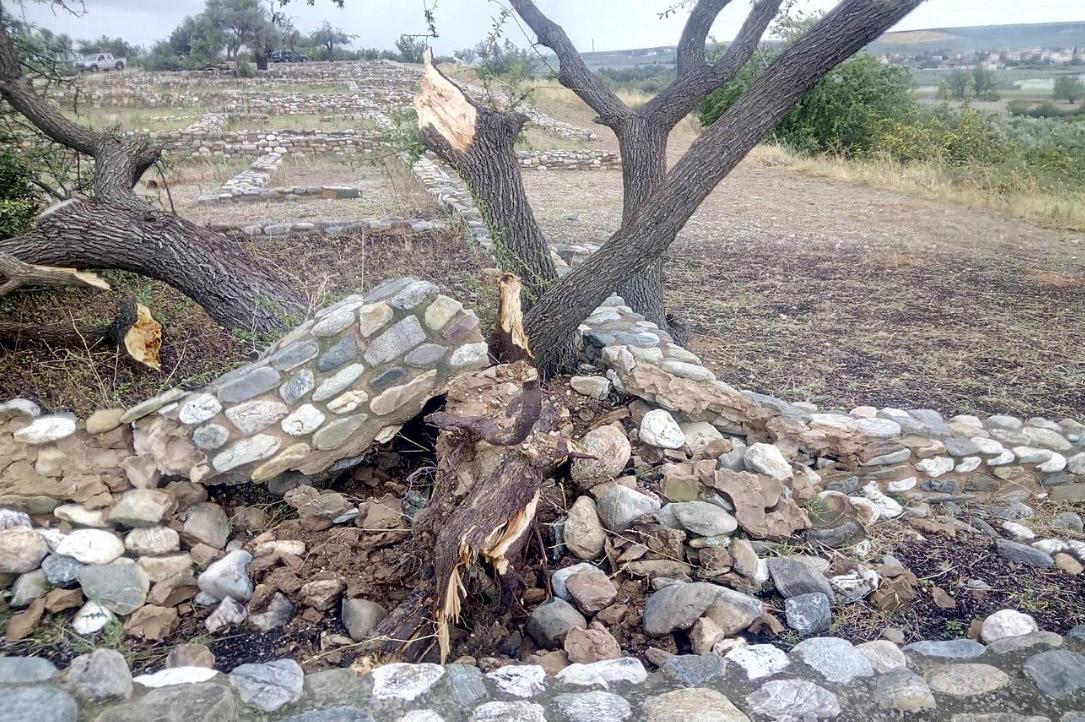Αρχαιολογικός χώρος Ολύνθου. Εκρίζωση δένδρου, που παρέσυρε αποκατεστημένο τμήμα αρχαίου τοίχου. Φωτ.: ΥΠΠΟΑ.