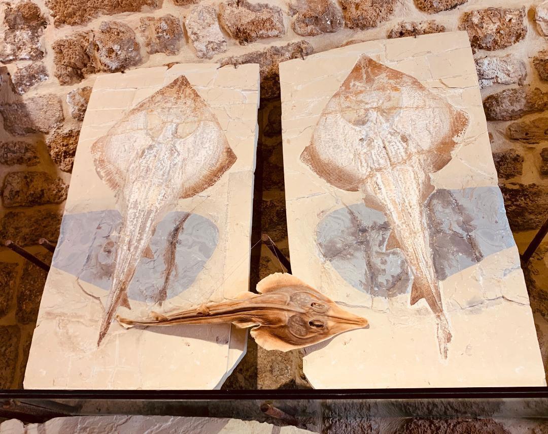 Ψάρια, μαλακόστρακα, αστερίες -και όχι μόνο- συνθέτουν ένα μοναδικό μωσαϊκό απολιθωμάτων, υψηλής ποιότητας και αξίας, που συναγωνίζονται επί ίσοις όροις τα αντίστοιχα που έχουν βρεθεί σε άλλες περιοχές της Ευρώπης και της Αμερικής.