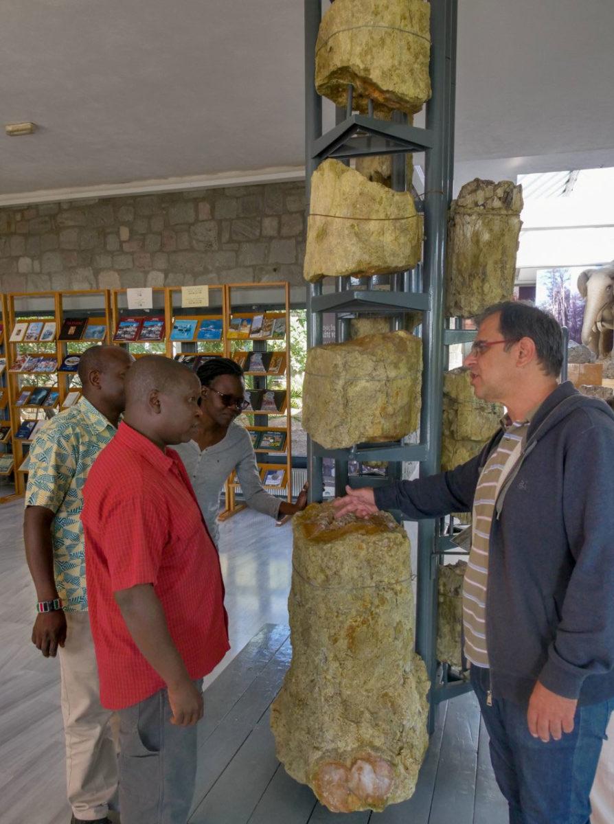 Η αντιπροσωπεία από την Κένυα θα ενημερωθεί για τις νέες ερευνητικές εργασίες του Μουσείου Φυσικής Ιστορίας Απολιθωμένου Δάσους Λέσβου στον τομέα συντήρησης του απολιθωμένου ξύλου.