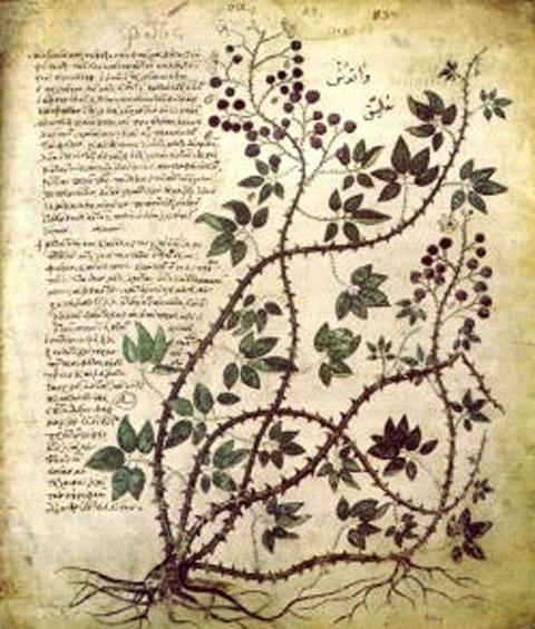Το περιεχόμενο των μαθημάτων είναι, μεταξύ άλλων, ανάγνωση βυζαντινών και μεταβυζαντινών χειρογράφων κωδίκων, ιστορία βιβλιοθηκών και περιγραφή και ανάλυση ιστορικών εγγράφων.
