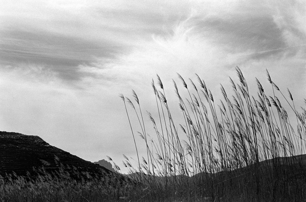Φωτογραφία της Ευγενίας Κουμαντάρου από την έκθεση «Ταπεινός Παράδεισος».