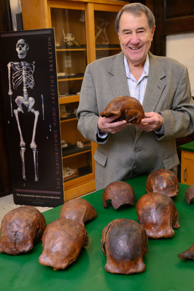 Ο Russell Ciochon φωτογραφίζεται με κρανία Homo erectus που βρέθηκαν στην Κεντρική Ιάβα (φωτ.: Tim Schoo – University of Iowa).