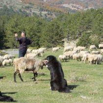 Άυλη πολιτιστική κληρονομιά η μετακινούμενη κτηνοτροφία και η βυζαντινή μουσική