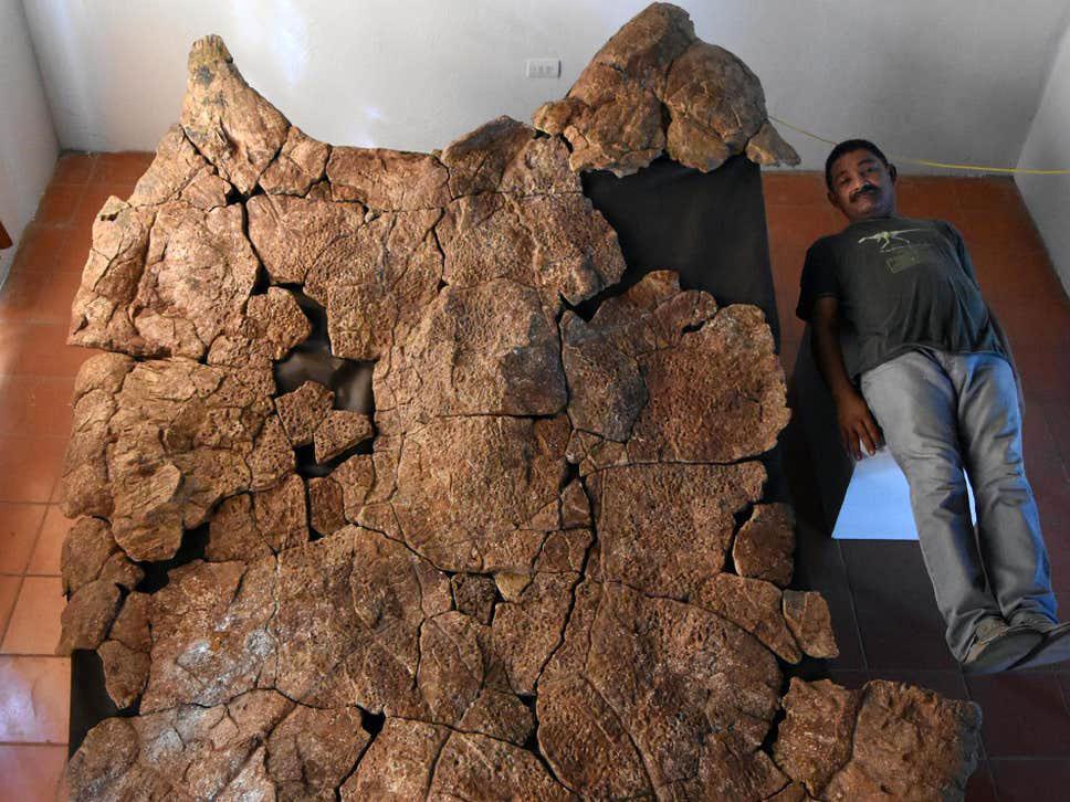 Βρέθηκαν απολιθώματα χελώνας με μέγεθος αυτοκινήτου