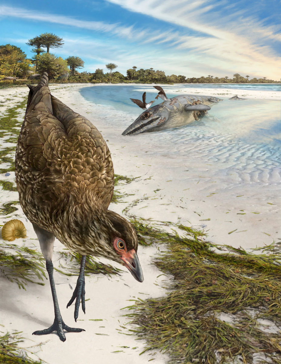 Η «Αστεριόρνις», το αρχαιότερο απολίθωμα πουλιού