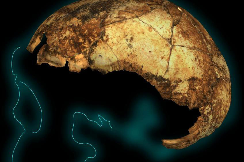 Το αρχαιότερο κρανίο «Όρθιου Ανθρώπου»