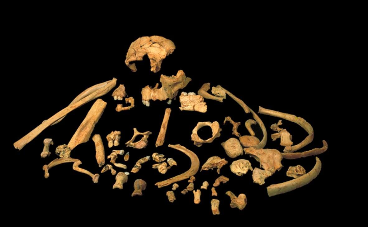 Στα δόντια ενός κανίβαλου Homo antecessor το αρχαιότερο γενετικό υλικό