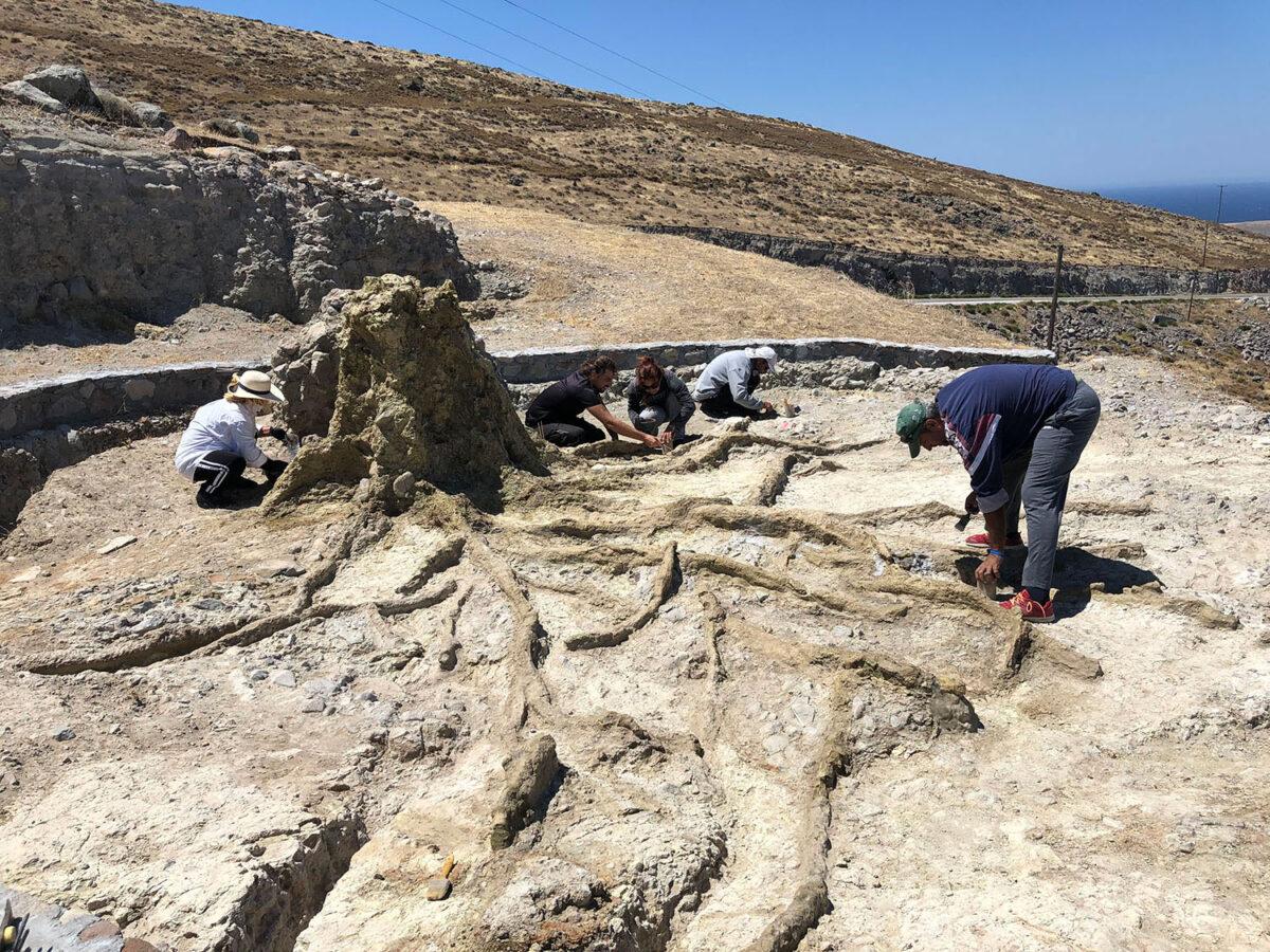 Εντυπωσιακό απολιθωμένο ριζικό σύστημα δέντρου.