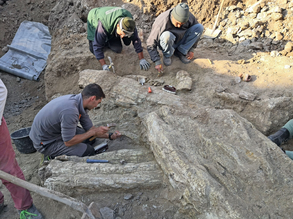 Απολιθωμένος κορμός κοντά στο Σίγρι (φωτ.: ΑΠΕ-ΜΠΕ).