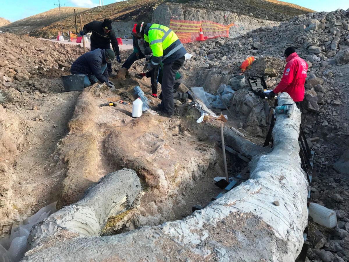 Το απολιθωμένο δέντρο ήρθε στο φως κατά τη διάρκεια σωστικών ανασκαφών που πραγματοποιούνται κατά μήκος του οδικού άξονα Καλλονής – Σιγρίου.