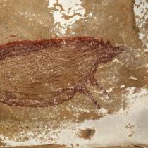 Στην Ινδονησία βρέθηκε η αρχαιότερη σπηλαιογραφία ζώου