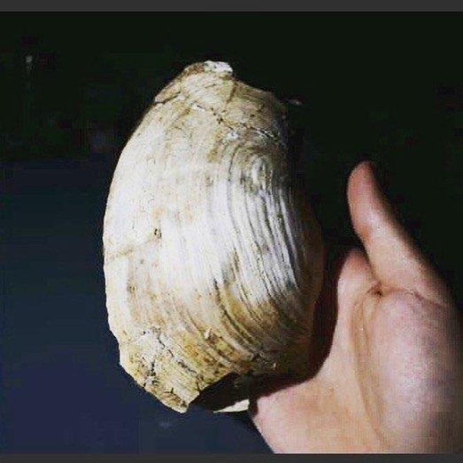 Τα ευρήματα αφορούν κυρίως το Πλειστόκαινο και προέρχονται τόσο από θαλάσσια όσο και από λιμναία περιβάλλοντα (φωτ.: Λουκάς Μαστής).