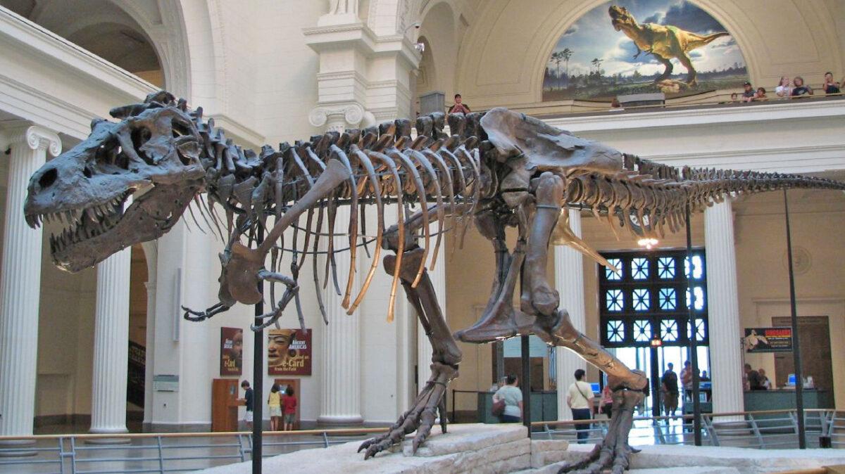 Σκελετός τυραννόσαυρου στο Field Museum of Natural History, στο Σικάγο (φωτ.: Βικιπαίδεια).