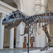 Περίπου 2,5 δισ. Τυραννόσαυροι περπάτησαν στη Γη