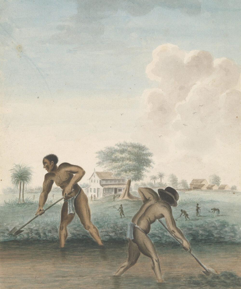 «Σκλάβοι ανοίγουν αυλάκια», έργο ανώνυμου καλλιτέχνη, περ. 1850, Rijksmuseum (φωτ.: Rijksmuseum).
