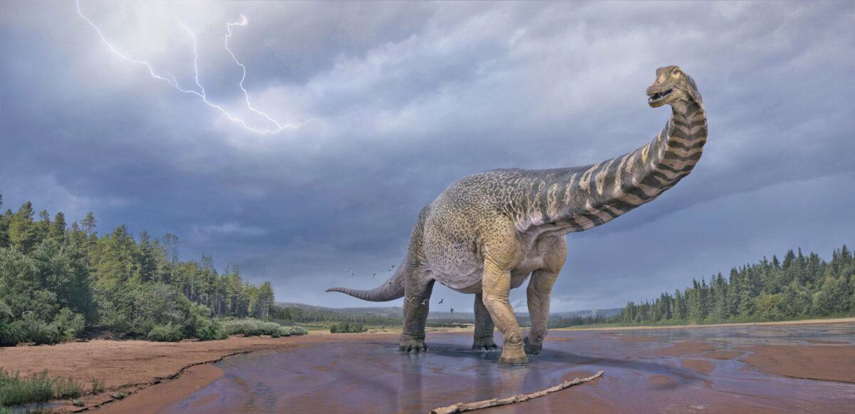 Καλλιτεχνική απεικόνιση του δεινόσαυρου Australotitan cooperensis. Πηγή εικόνας: Eromanga Natural History Museum / Vlad Konstantinov.