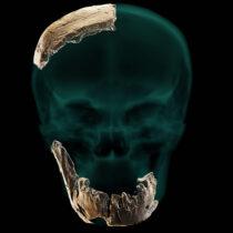 Άγνωστος Homo εντοπίστηκε στο Ισραήλ