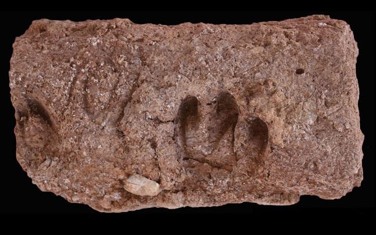 Οι κατσίκες εξημερώθηκαν στο δυτικό Ιράν πριν από 10.000 χρόνια
