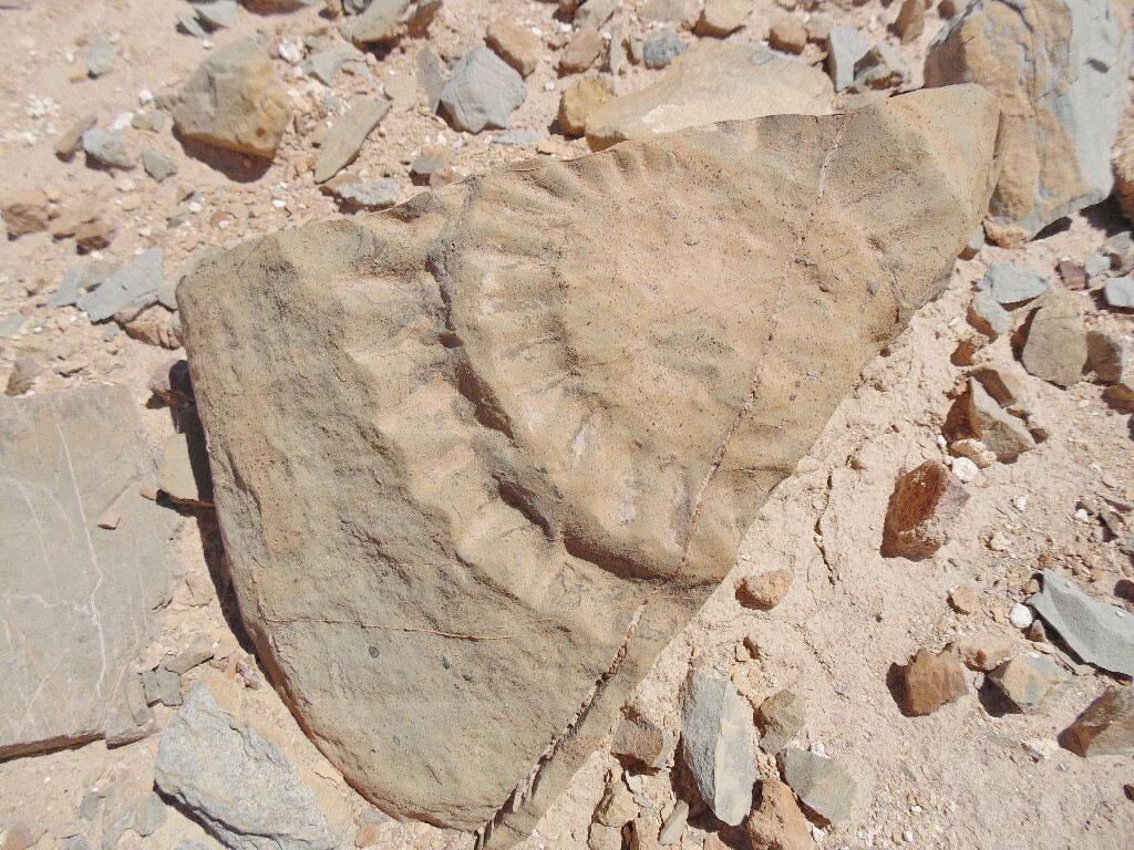 Απολιθωμένα λείψανα πτερόσαυρου στην έρημο Ατακάμα