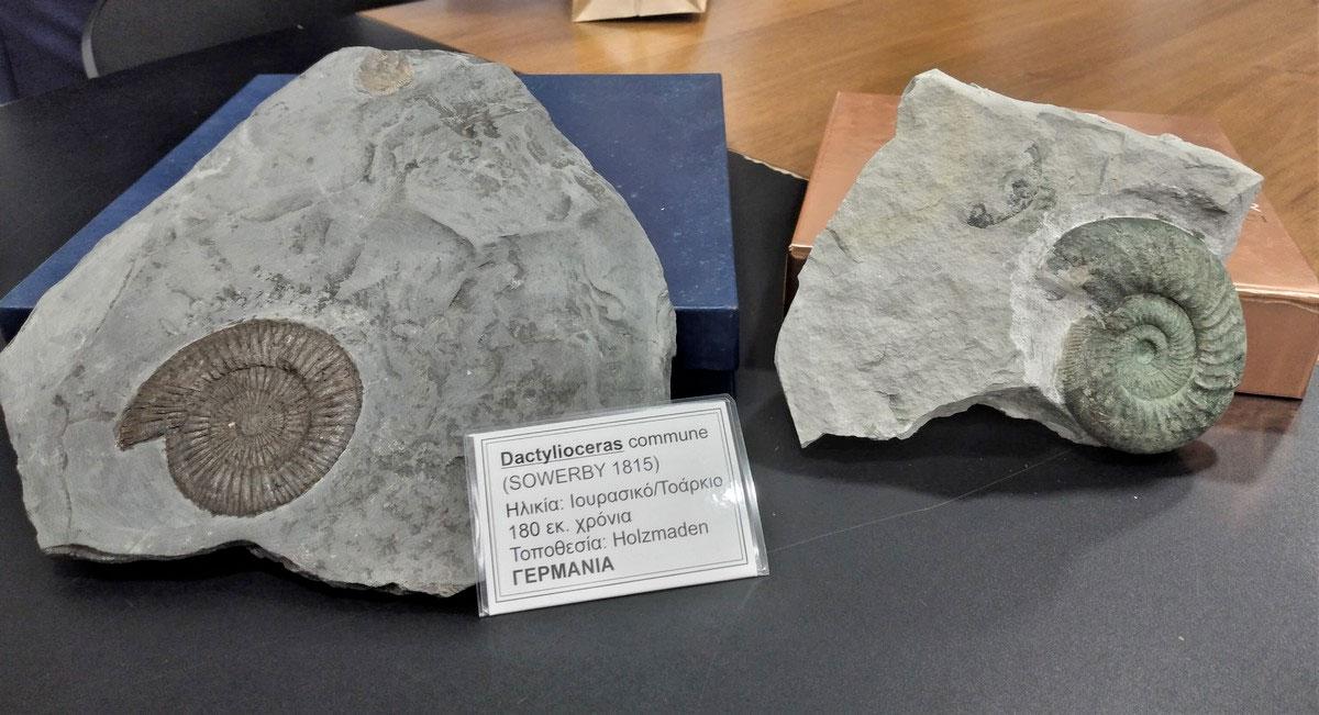 Μουσείο Απολιθωμάτων θα αποκτήσει το Ρέθυμνο