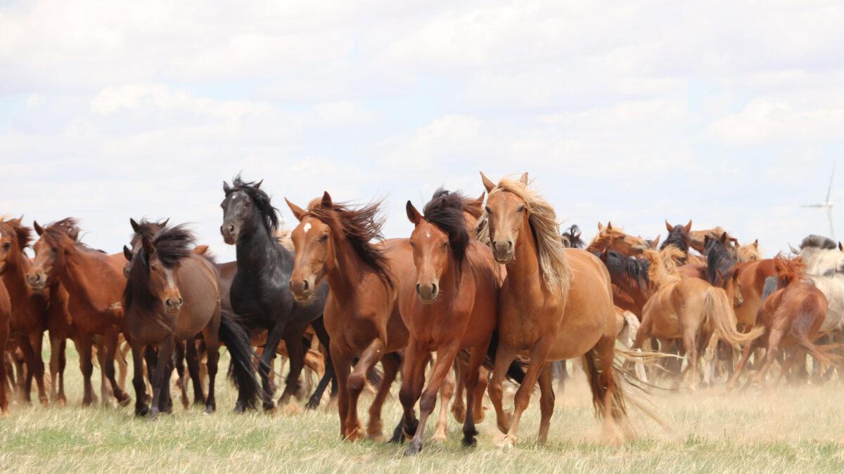 Τα σύγχρονα άλογα εξημερώθηκαν στις στέπες Πόντου-Κασπίας